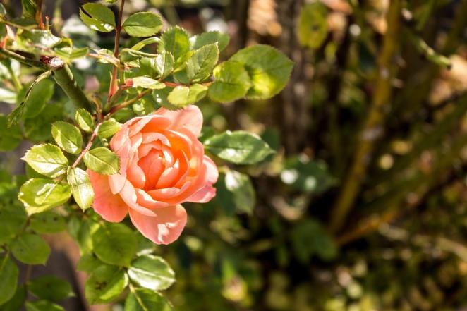 pink33