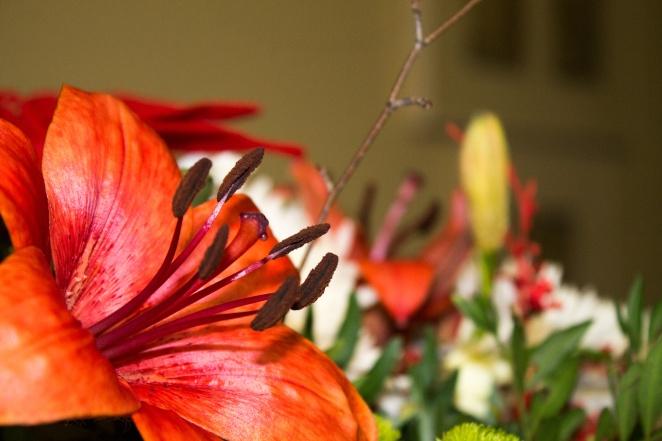FlowerRed.jpg